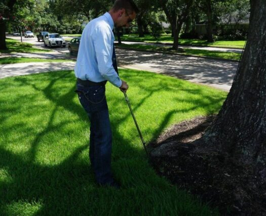 Arborist-Consultations-Scottsdale Tree Trimming and Stump Grinding Services-We Offer Tree Trimming Services, Tree Removal, Tree Pruning, Tree Cutting, Residential and Commercial Tree Trimming Services, Storm Damage, Emergency Tree Removal, Land Clearing, Tree Companies, Tree Care Service, Stump Grinding, and we're the Best Tree Trimming Company Near You Guaranteed!