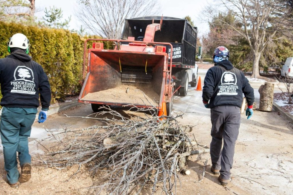 Commercial-Tree-Services-Scottsdale Tree Trimming and Stump Grinding Services-We Offer Tree Trimming Services, Tree Removal, Tree Pruning, Tree Cutting, Residential and Commercial Tree Trimming Services, Storm Damage, Emergency Tree Removal, Land Clearing, Tree Companies, Tree Care Service, Stump Grinding, and we're the Best Tree Trimming Company Near You Guaranteed!