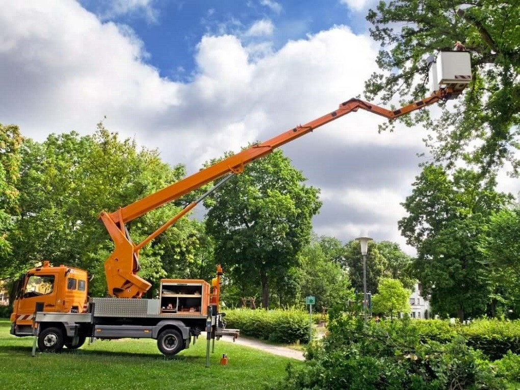 Contact Us-Scottsdale Tree Trimming and Stump Grinding Services-We Offer Tree Trimming Services, Tree Removal, Tree Pruning, Tree Cutting, Residential and Commercial Tree Trimming Services, Storm Damage, Emergency Tree Removal, Land Clearing, Tree Companies, Tree Care Service, Stump Grinding, and we're the Best Tree Trimming Company Near You Guaranteed!