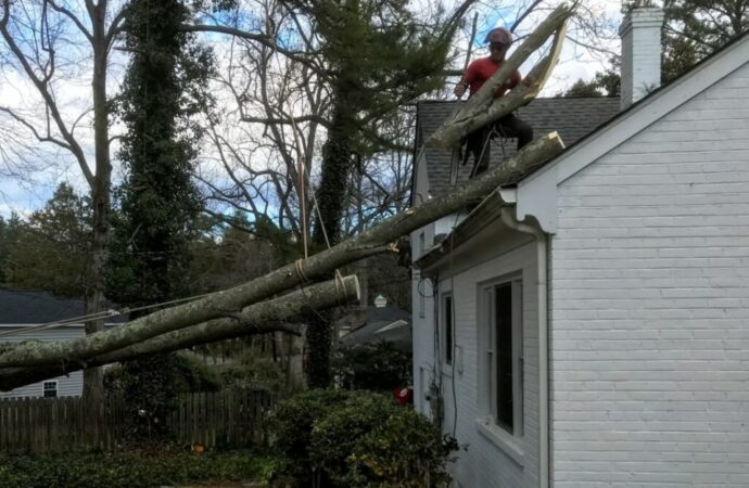 Emergency-Tree-Removal-Scottsdale Tree Trimming and Stump Grinding Services-We Offer Tree Trimming Services, Tree Removal, Tree Pruning, Tree Cutting, Residential and Commercial Tree Trimming Services, Storm Damage, Emergency Tree Removal, Land Clearing, Tree Companies, Tree Care Service, Stump Grinding, and we're the Best Tree Trimming Company Near You Guaranteed!