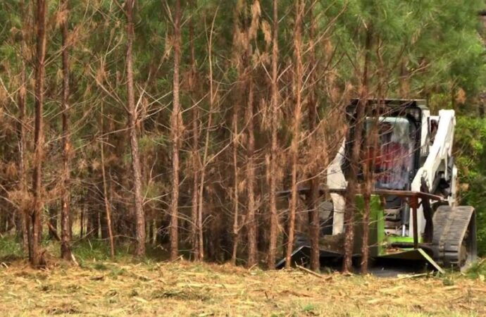 Land-Clearing-Scottsdale Tree Trimming and Stump Grinding Services-We Offer Tree Trimming Services, Tree Removal, Tree Pruning, Tree Cutting, Residential and Commercial Tree Trimming Services, Storm Damage, Emergency Tree Removal, Land Clearing, Tree Companies, Tree Care Service, Stump Grinding, and we're the Best Tree Trimming Company Near You Guaranteed!