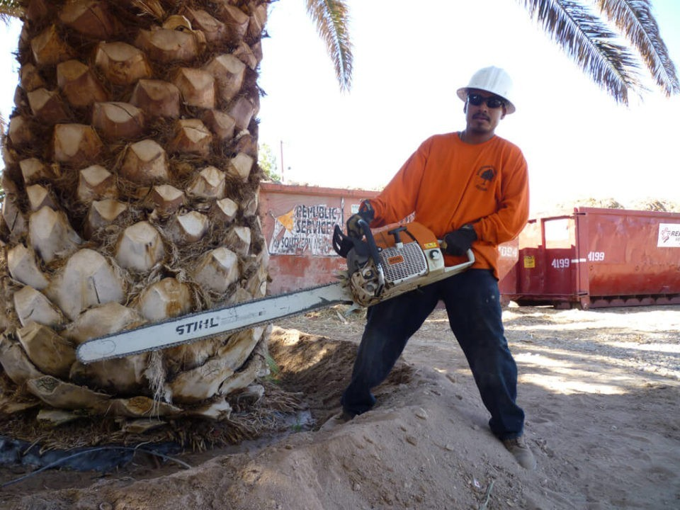 Palm-Tree-Removal-Scottsdale Tree Trimming and Stump Grinding Services-We Offer Tree Trimming Services, Tree Removal, Tree Pruning, Tree Cutting, Residential and Commercial Tree Trimming Services, Storm Damage, Emergency Tree Removal, Land Clearing, Tree Companies, Tree Care Service, Stump Grinding, and we're the Best Tree Trimming Company Near You Guaranteed!