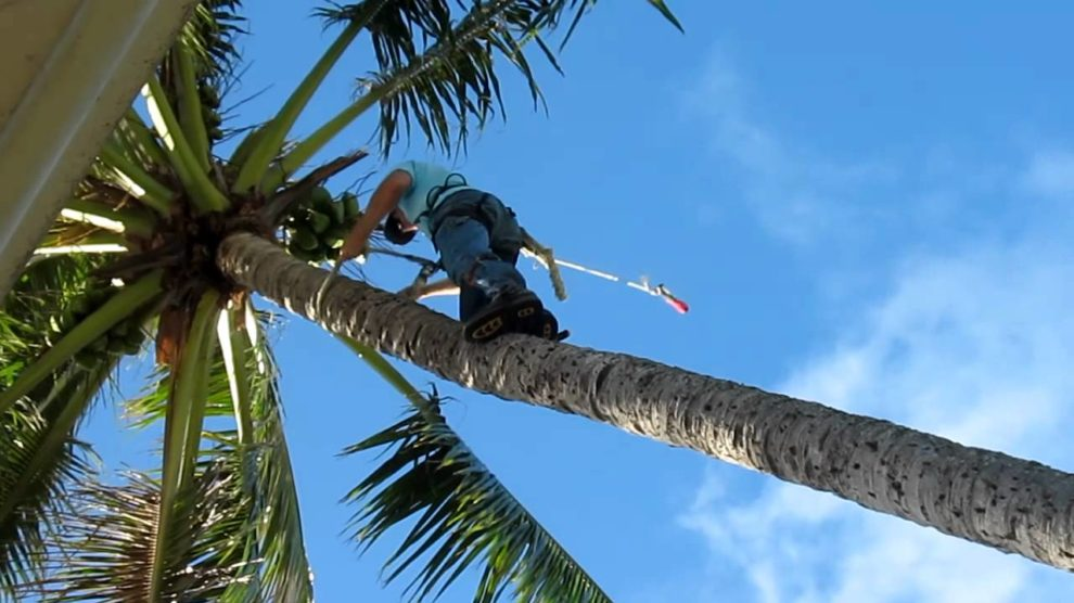 Palm Tree Trimming and Removal-Scottsdale Tree Trimming and Stump Grinding Services-We Offer Tree Trimming Services, Tree Removal, Tree Pruning, Tree Cutting, Residential and Commercial Tree Trimming Services, Storm Damage, Emergency Tree Removal, Land Clearing, Tree Companies, Tree Care Service, Stump Grinding, and we're the Best Tree Trimming Company Near You Guaranteed!