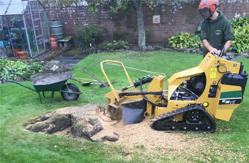 Stump-Removal-Scottsdale Tree Trimming and Stump Grinding Services-We Offer Tree Trimming Services, Tree Removal, Tree Pruning, Tree Cutting, Residential and Commercial Tree Trimming Services, Storm Damage, Emergency Tree Removal, Land Clearing, Tree Companies, Tree Care Service, Stump Grinding, and we're the Best Tree Trimming Company Near You Guaranteed!