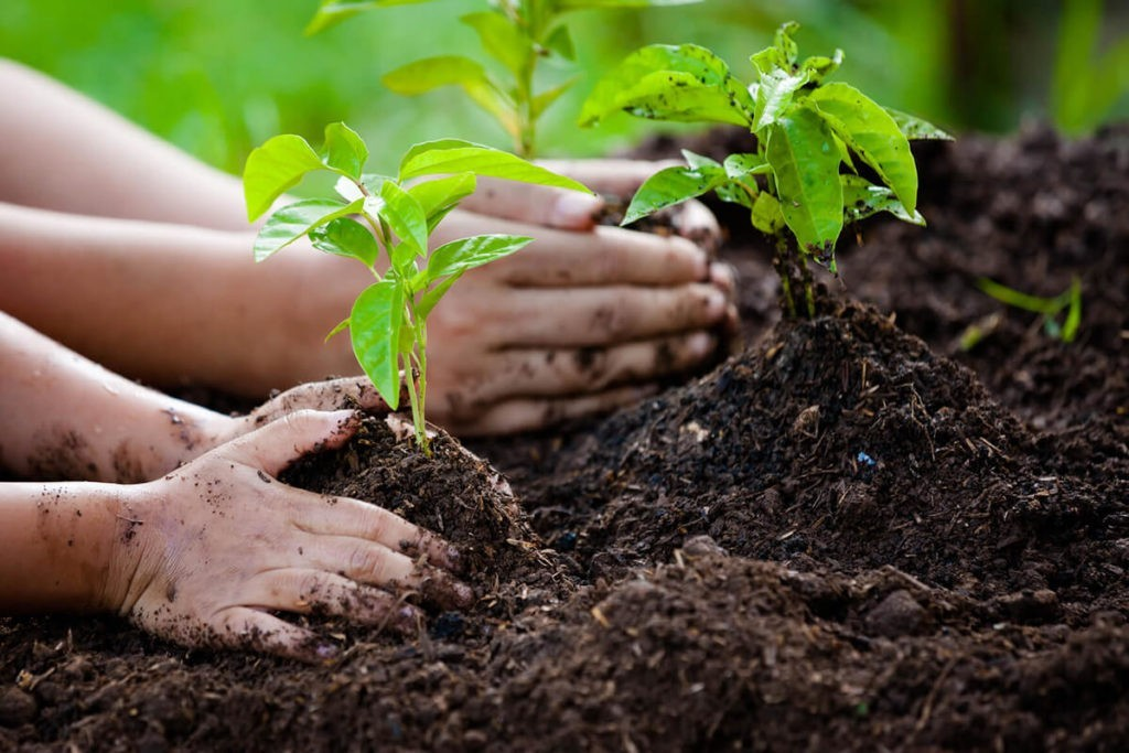 Tree-Planting-Scottsdale Tree Trimming and Stump Grinding Services-We Offer Tree Trimming Services, Tree Removal, Tree Pruning, Tree Cutting, Residential and Commercial Tree Trimming Services, Storm Damage, Emergency Tree Removal, Land Clearing, Tree Companies, Tree Care Service, Stump Grinding, and we're the Best Tree Trimming Company Near You Guaranteed!
