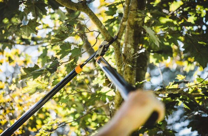 Tree-Pruning-Scottsdale Tree Trimming and Stump Grinding Services-We Offer Tree Trimming Services, Tree Removal, Tree Pruning, Tree Cutting, Residential and Commercial Tree Trimming Services, Storm Damage, Emergency Tree Removal, Land Clearing, Tree Companies, Tree Care Service, Stump Grinding, and we're the Best Tree Trimming Company Near You Guaranteed!