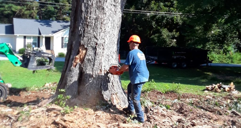 Tree-Removal-Scottsdale Tree Trimming and Stump Grinding Services-We Offer Tree Trimming Services, Tree Removal, Tree Pruning, Tree Cutting, Residential and Commercial Tree Trimming Services, Storm Damage, Emergency Tree Removal, Land Clearing, Tree Companies, Tree Care Service, Stump Grinding, and we're the Best Tree Trimming Company Near You Guaranteed!