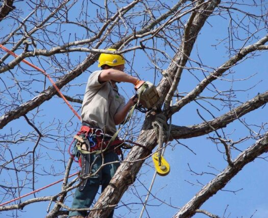 Tree-Trimming-Scottsdale Tree Trimming and Stump Grinding Services-We Offer Tree Trimming Services, Tree Removal, Tree Pruning, Tree Cutting, Residential and Commercial Tree Trimming Services, Storm Damage, Emergency Tree Removal, Land Clearing, Tree Companies, Tree Care Service, Stump Grinding, and we're the Best Tree Trimming Company Near You Guaranteed!