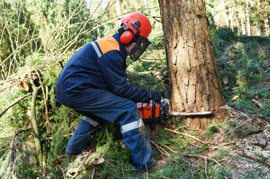Fort McDowell-Scottsdale Tree Trimming and Stump Grinding Services-We Offer Tree Trimming Services, Tree Removal, Tree Pruning, Tree Cutting, Residential and Commercial Tree Trimming Services, Storm Damage, Emergency Tree Removal, Land Clearing, Tree Companies, Tree Care Service, Stump Grinding, and we're the Best Tree Trimming Company Near You Guaranteed!