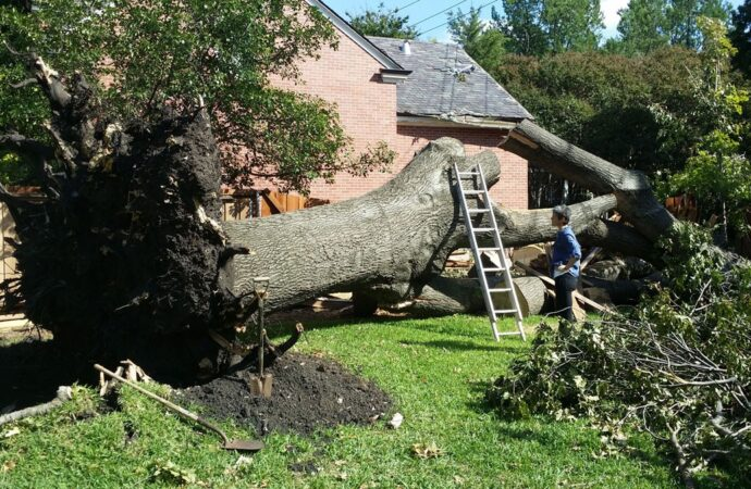 Fountain Hills-Scottsdale Tree Trimming and Stump Grinding Services-We Offer Tree Trimming Services, Tree Removal, Tree Pruning, Tree Cutting, Residential and Commercial Tree Trimming Services, Storm Damage, Emergency Tree Removal, Land Clearing, Tree Companies, Tree Care Service, Stump Grinding, and we're the Best Tree Trimming Company Near You Guaranteed!