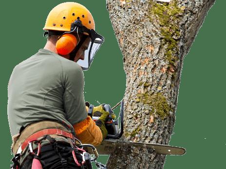treeman-treecarescottsdale